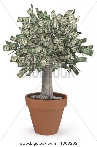 Money Tree In Flower Pot