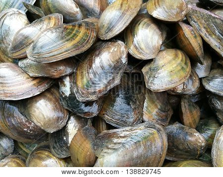 Close up of many fresh clams for sale at market