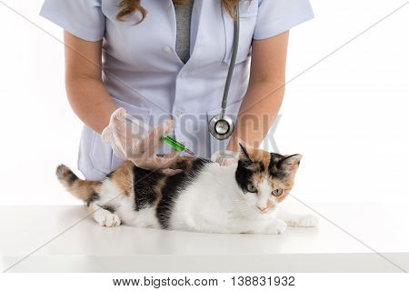 veterinarian is giving a cat a vaccination on white background isolated