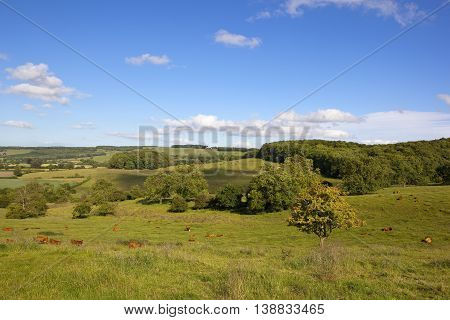Grazing Meadows In Summer