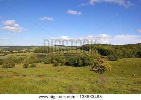Grazing Meadows In Summer