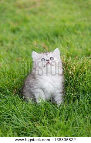 Close up cute tabby kitten sitting and looking up on green grass