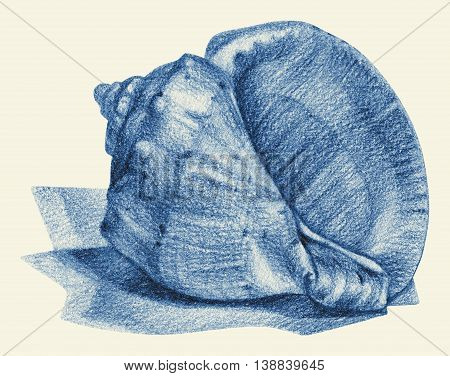 Illustration with seashell drawn by hand with pencil. Pencil sketch academic drawing. Summer sea theme
