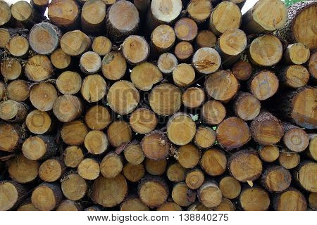 stack of sawn tree trunks and stacked ready for use