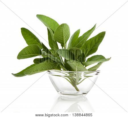 green leaves of sage herb, isolated on white background