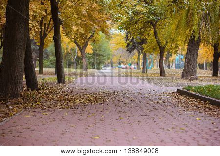 Autumn park with yellow leaves. Bright autumn