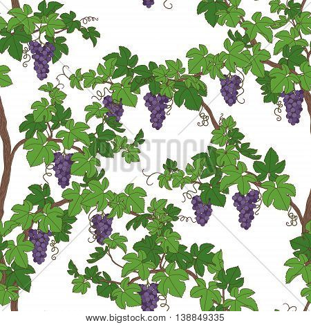 Seamless pattern with grapes. Green branches with bunch of grape.