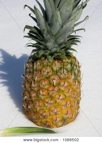 Pineapple Golden.