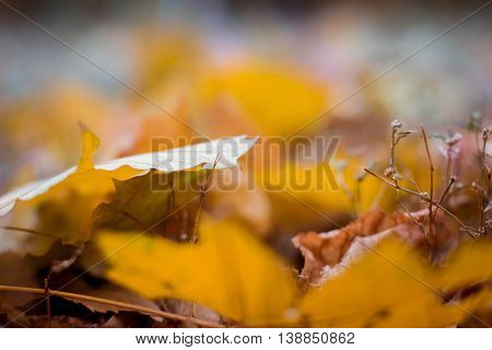Autumn Park. Yellow leaves lie on the ground
