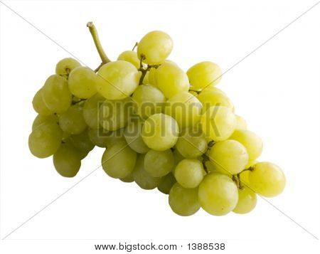 Fresh White Grape Vine