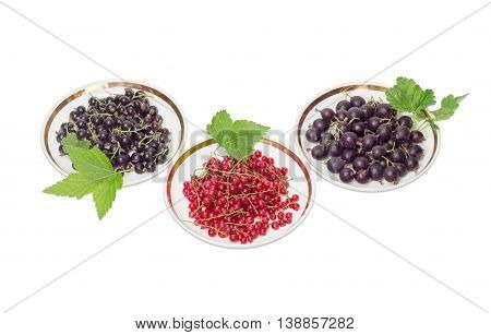 Fresh blackcurrant redcurrant and jostaberry with leaves on a three saucers on a light background