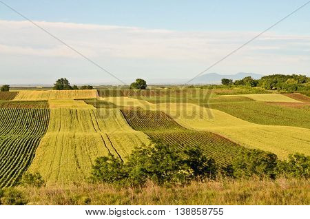 Hilly cultivated fields. Agriculture in central Europe.