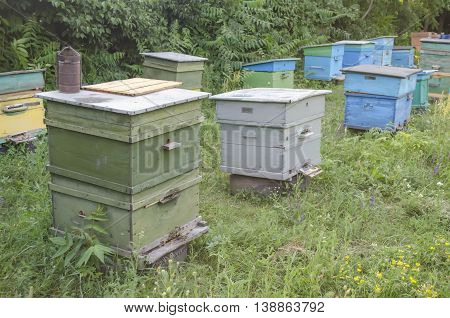 bee proofs with honey on an apiary in a sunny day