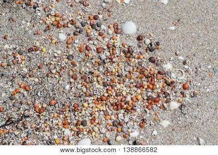 full frame background showing lots of colorful small sea snail shells seen in Brittany