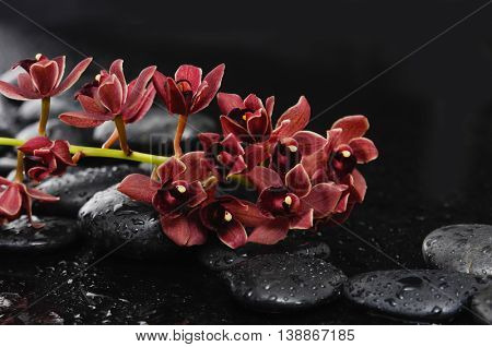 still life with red branch orchid on black stones