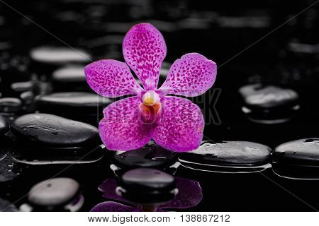 Still life with pink orchid on wet black stones