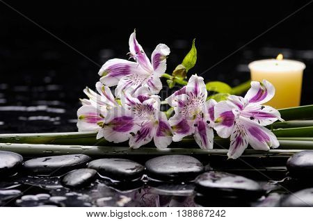Lying down branch orchid and candle on black stones
