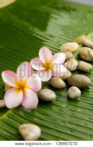 Two frangipani with pile of stones on banana leaf