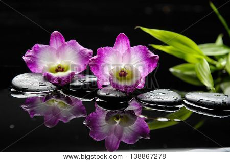 Two orchid with pebbles and bamboo leaf on wet background