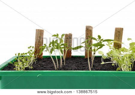 Different Seedlings Being Cultivated