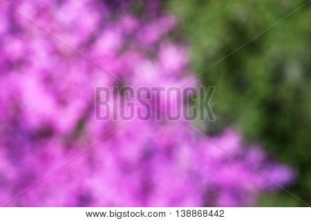 a very nice of beautiful purple flowers