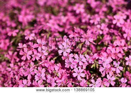 a very nice a  beautiful purple flowers