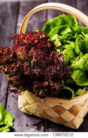 Bunch of green and red lettuce in wicker basket on a dark wooden background