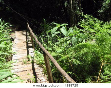 Wooden Stairway Down Through A Forest