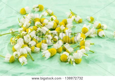 Dried Chamomile Flowers For Making Healthy Tea