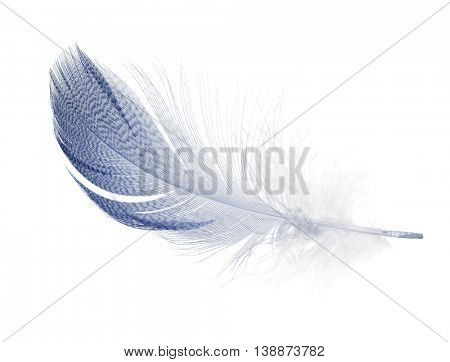 striped blue feather isolated on white background