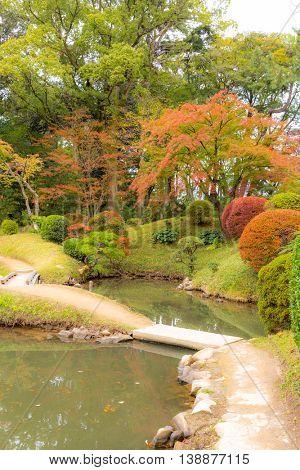 Autumn leaves in beautiful japanese garden.