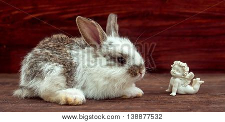 Little Rabbit And Dreaming Angel