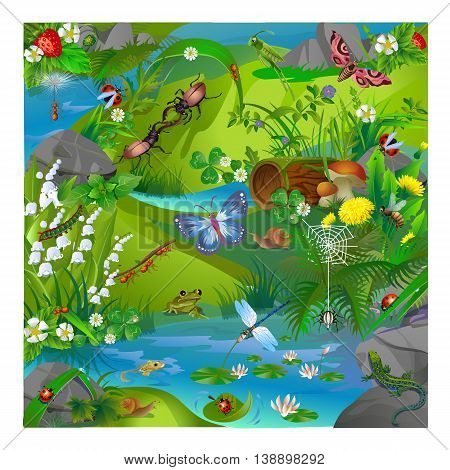 vector illustration of summer life in the forest insects. Images of dragonflies ladybirds ants butterfly grasshopper snail spider bee and frog and lizard.