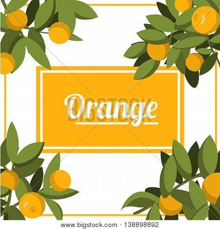 Vector an illustration with the image of fruits of orange on branches with leaves and the text.banner with the image of citruses on a branch.