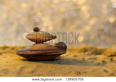 Summer beach. Closeup view on two big mussel (Unionidae) with small mussel (Dreissena polymorpha Pallas) on a sand and river with sunlight spots as background at sunset. shallow dof