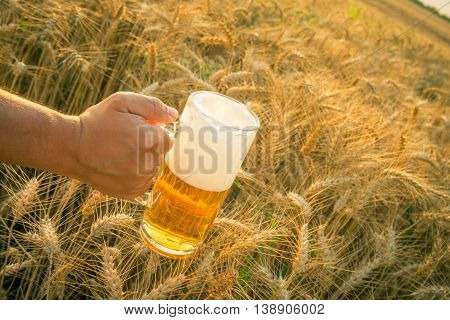 Close up of male hand holding glass mug of beer Wheat field and blue sky in the background. Beer industry and natural ingredients beverage concepts.