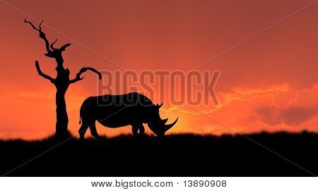 African Rhinoceros Silhouette