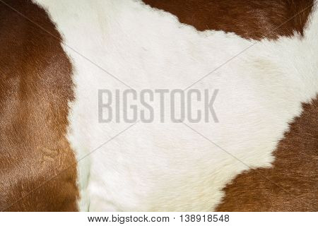 Spotted horse fur for background and texture