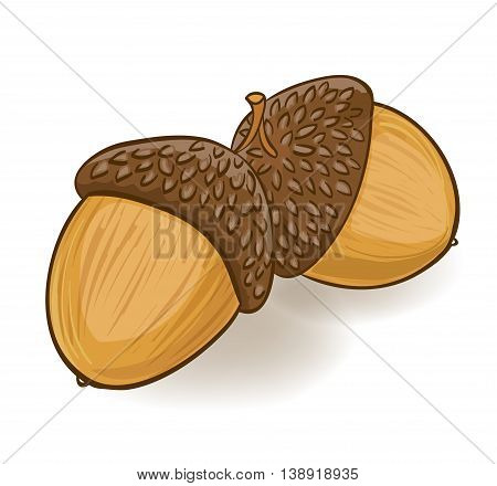 cartoon acorns on white. hand drawn vector illustration