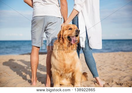 Closeup of cute dog walking with young couple on the beach