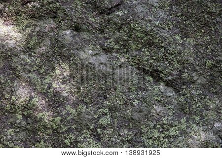 texture of surface of big wild natural grey stone diabase with green patina and moss and lichen foreground closeup in Crimea