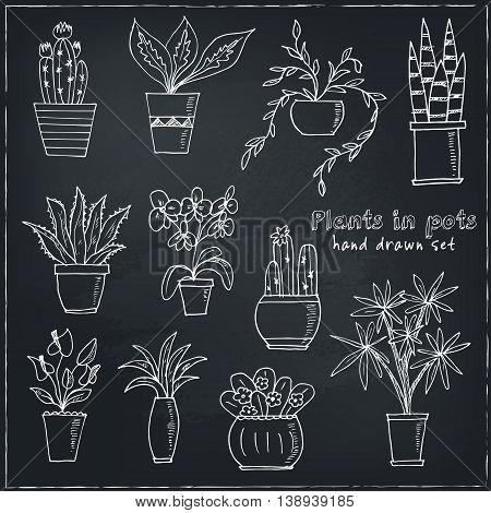 Set of plants in a pot Hand drawn doodle vector sketch illustration