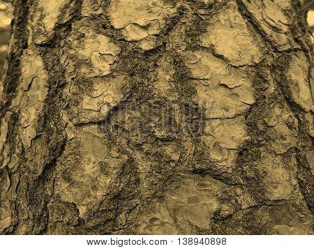 Tree Bark Sepia