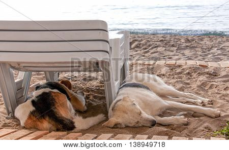 Stray dog on the beach, lying under sun beds in sand, hiding from sun