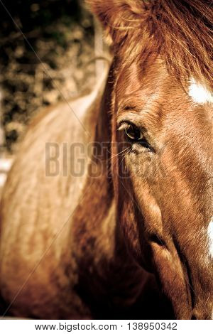 Close-up of brown horse gazing forward against blurred background