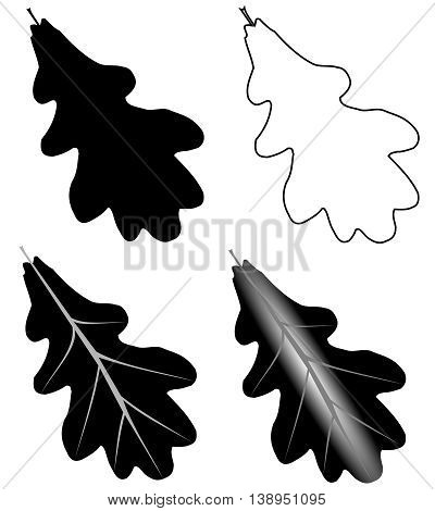 oak , isolated oak leaf , illustration oak leaf ,