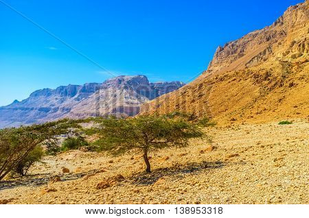 The hiking to the mountains of Judean desert in Ein Gedi Nature Reserve Israel.