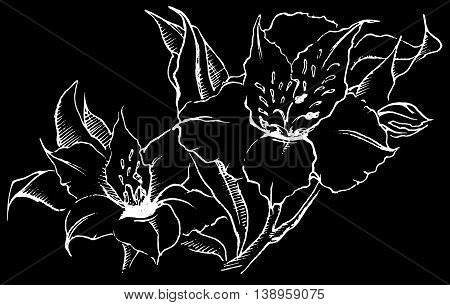 Monochrome alstroemeria flower composition vector sketched art