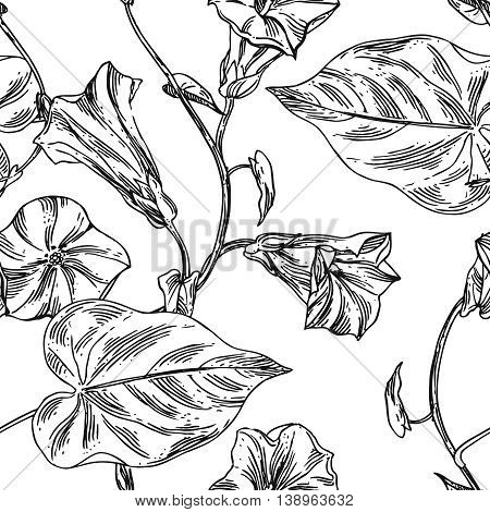 Beautiful hand drawn close up vector illustration sketching of wildflowers. Boho style floral seamless pattern.