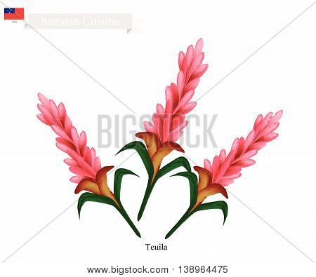 Samoa Flower Illustration of Teuila Alpinia Purpurata or Red Ginger Flower. The National Flower of Samoa.